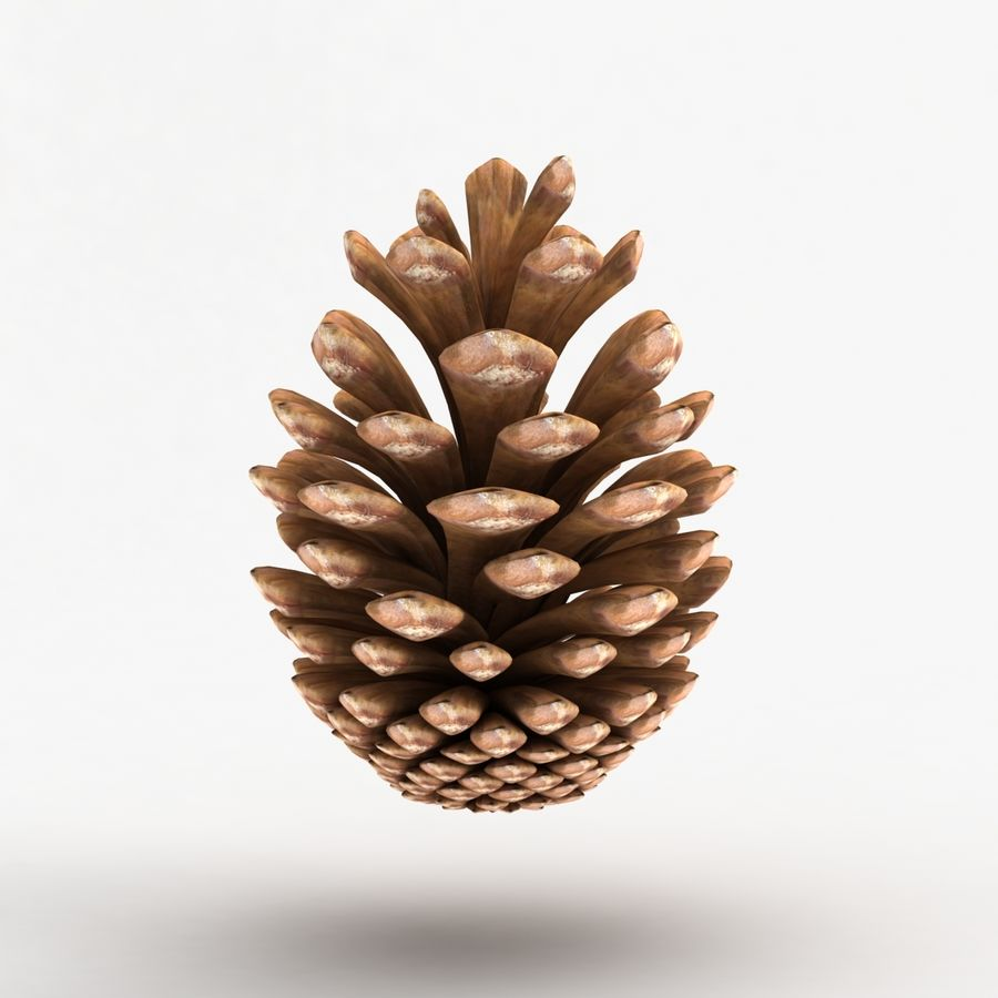 Fir Cone royalty-free 3d model - Preview no. 7