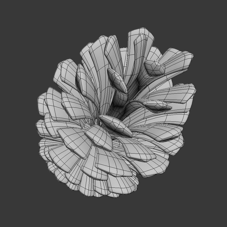Fir Cone royalty-free 3d model - Preview no. 11