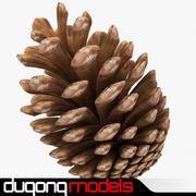 Fir Cone 3d model