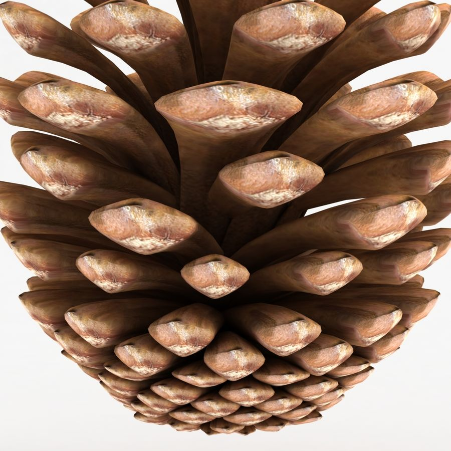 Fir Cone royalty-free 3d model - Preview no. 8