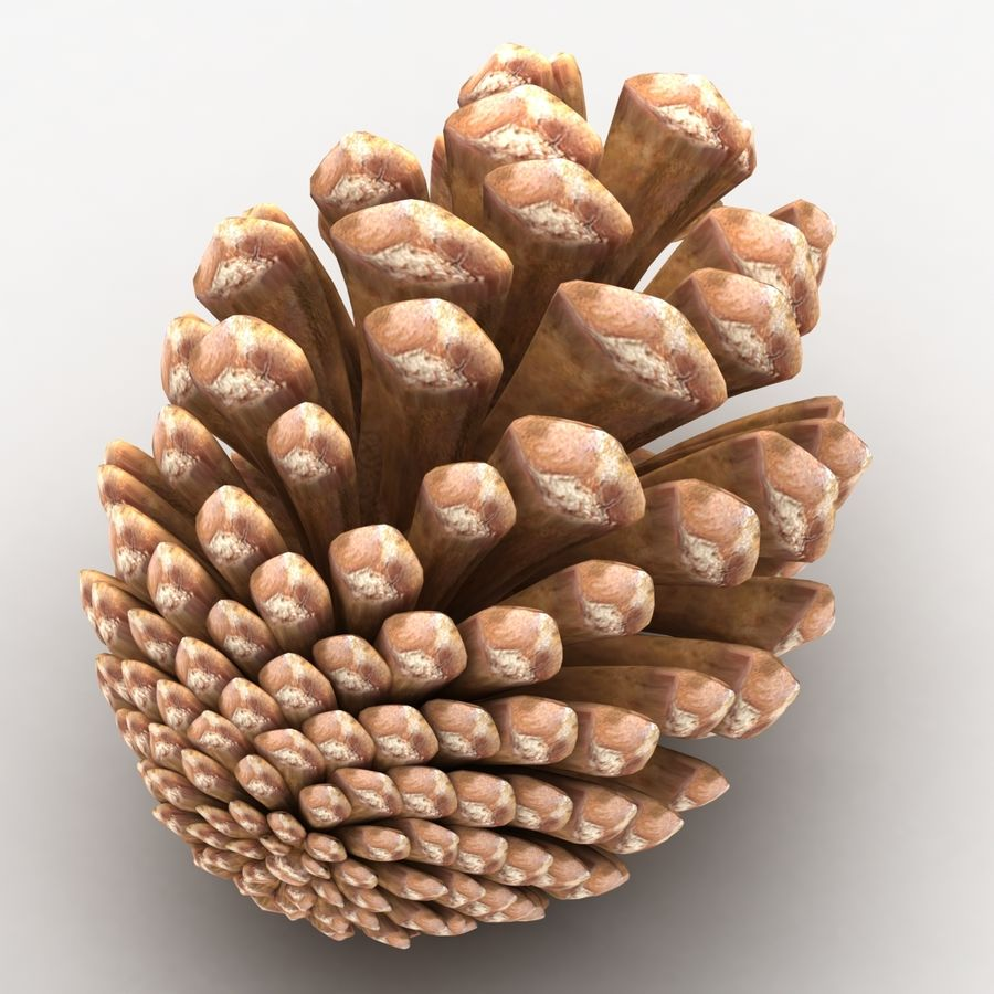 Fir Cone royalty-free 3d model - Preview no. 4