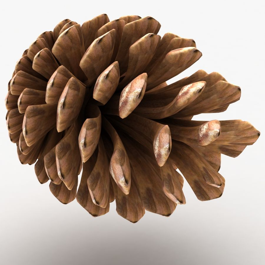 Fir Cone royalty-free 3d model - Preview no. 6
