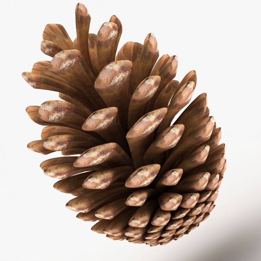 Fir Cone royalty-free 3d model - Preview no. 2