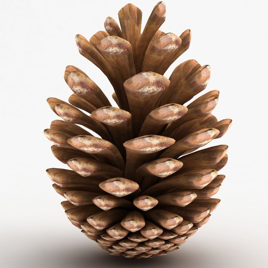 Fir Cone royalty-free 3d model - Preview no. 3