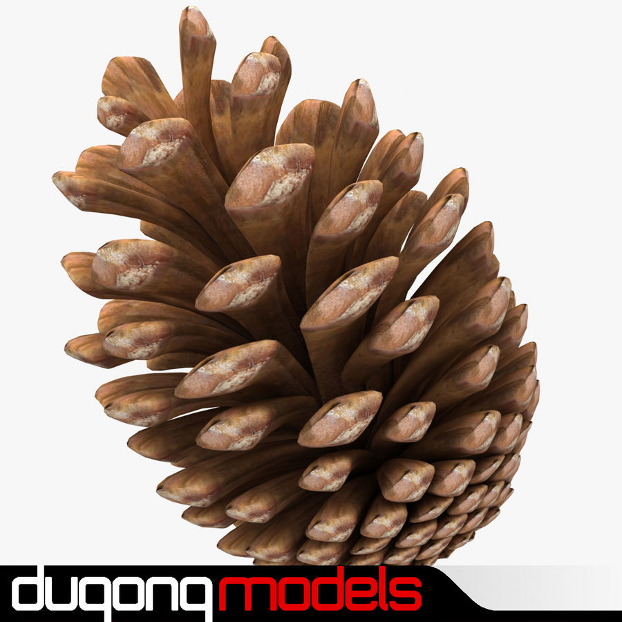 Fir Cone royalty-free 3d model - Preview no. 1