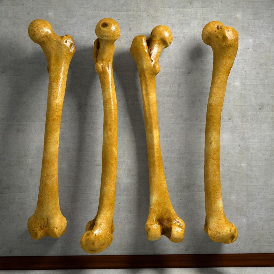 Human Femur Thigh Bone Leg Anatomy 3D Model $29 - .fbx .obj .dae ...