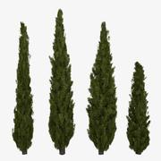 Italienische Cypress 3d model