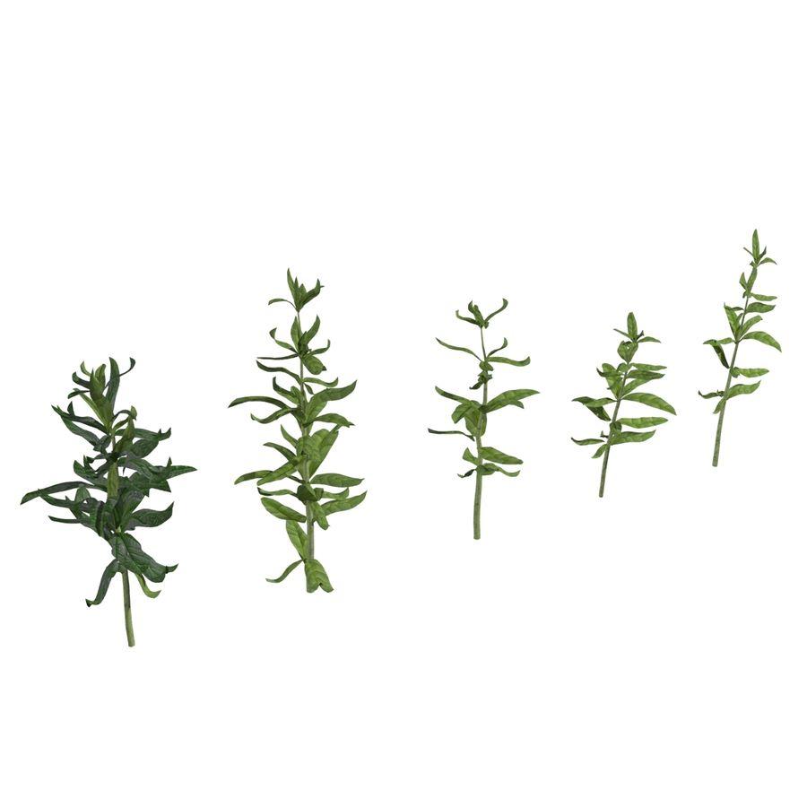 Grüne Pflanzen royalty-free 3d model - Preview no. 1