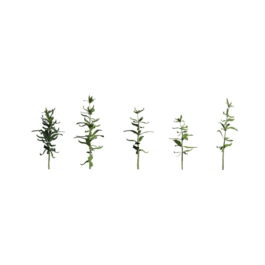 Grüne Pflanzen royalty-free 3d model - Preview no. 13