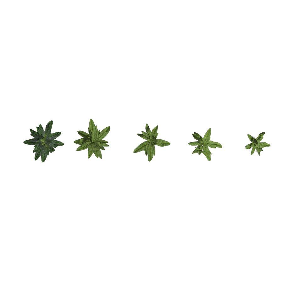 Grüne Pflanzen royalty-free 3d model - Preview no. 14