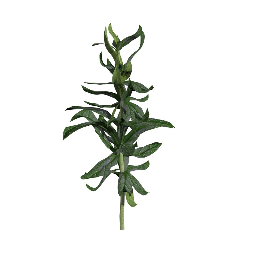 Grüne Pflanzen royalty-free 3d model - Preview no. 3