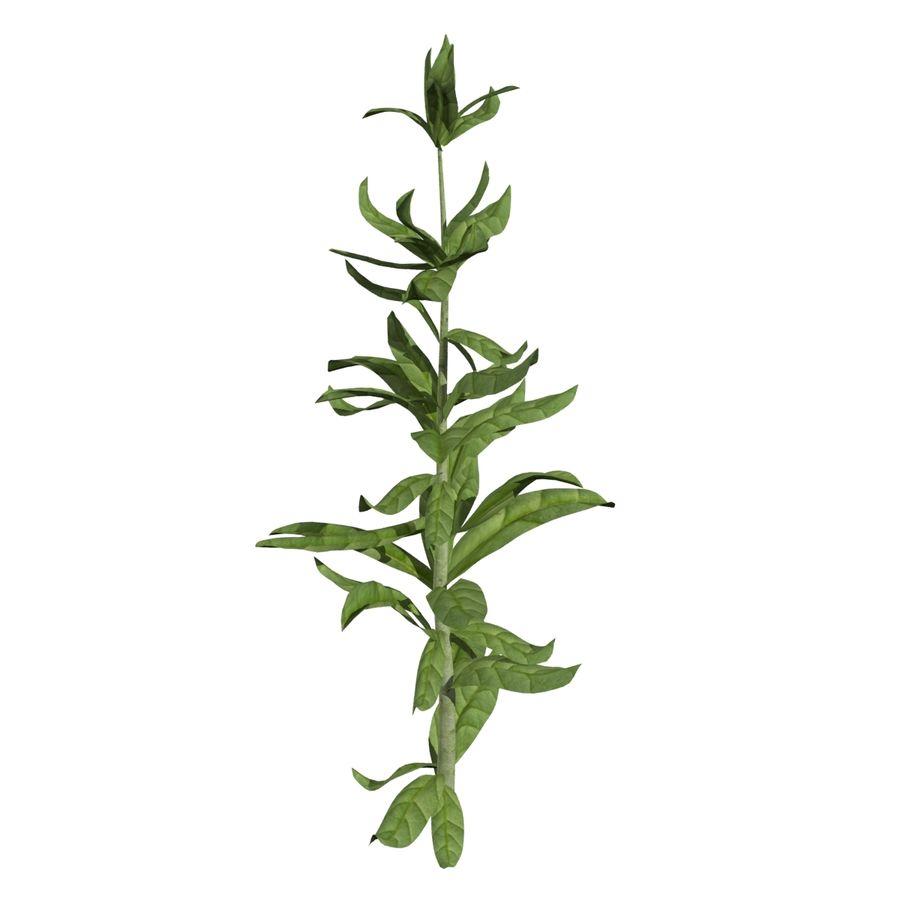 Grüne Pflanzen royalty-free 3d model - Preview no. 5