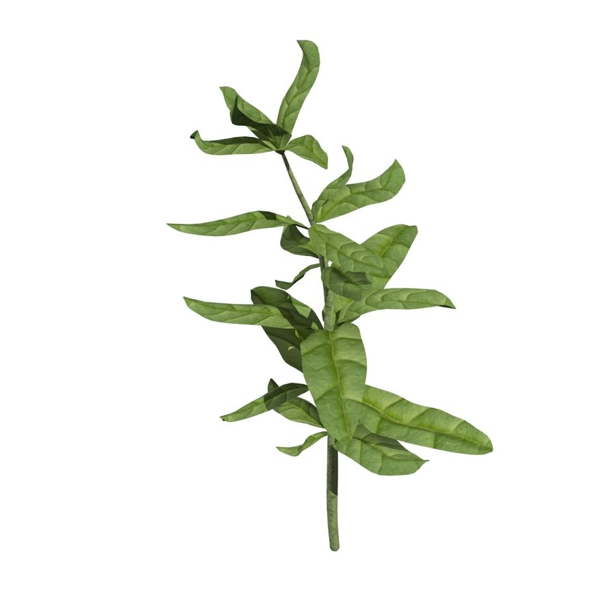 Grüne Pflanzen royalty-free 3d model - Preview no. 9