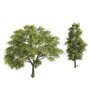 Ash Trees 3d model