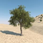ガーフツリー01 3d model