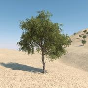 Drzewo Ghaf 01 3d model