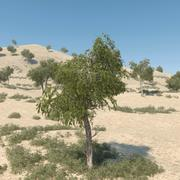Drzewo Ghaf 03 3d model