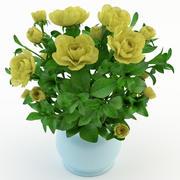 Gardenia Geel 3d model