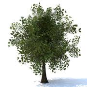 Tree Cinema 4D 3d model