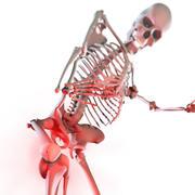 マヤの人間の骨格 3d model