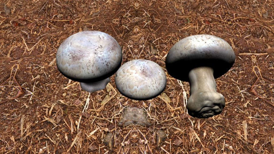 Agaricus_bisporus royalty-free 3d model - Preview no. 2