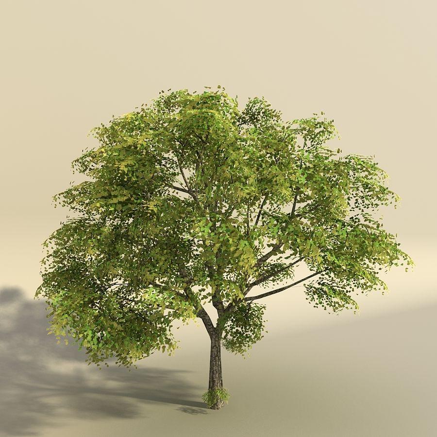 树森林 royalty-free 3d model - Preview no. 2