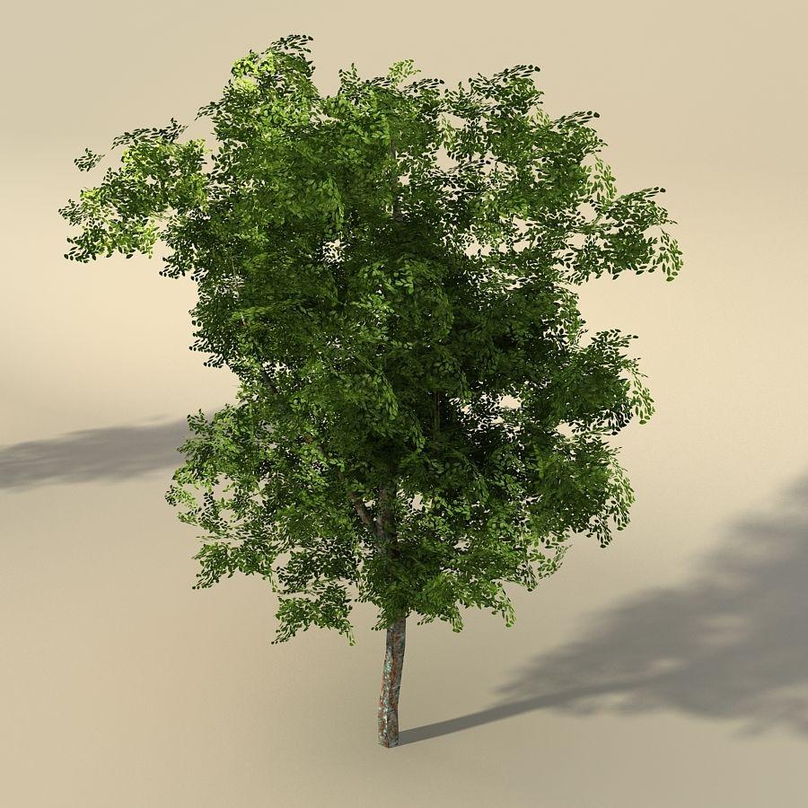 树森林 royalty-free 3d model - Preview no. 3
