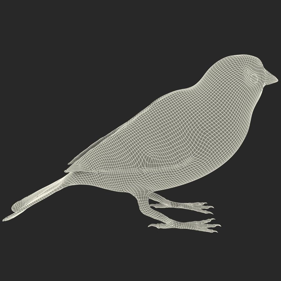 Pardal royalty-free 3d model - Preview no. 18