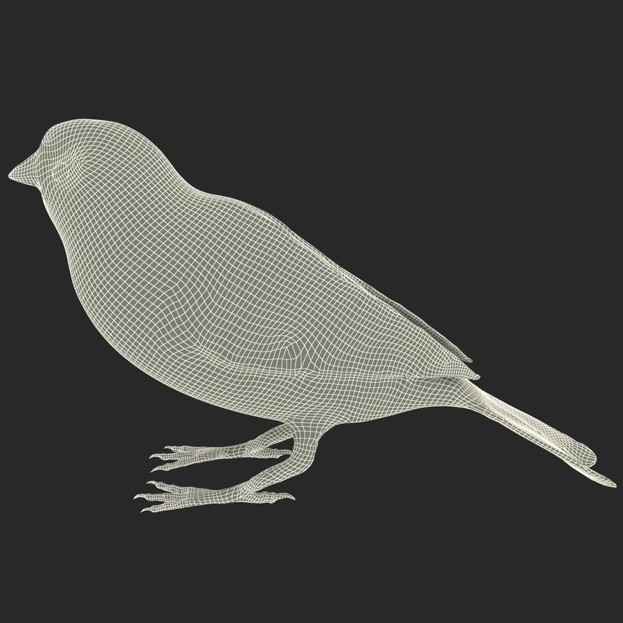 Pardal royalty-free 3d model - Preview no. 15