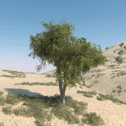 Kolekcja drzew Ghaf 3d model