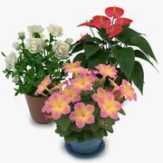 Flowers in Pot 01 3d model