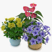 Flowers in Pot 02 3d model