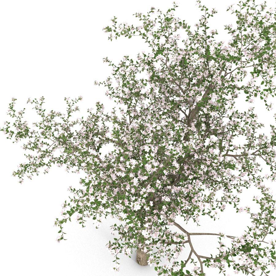 꽃 사과 나무 royalty-free 3d model - Preview no. 14