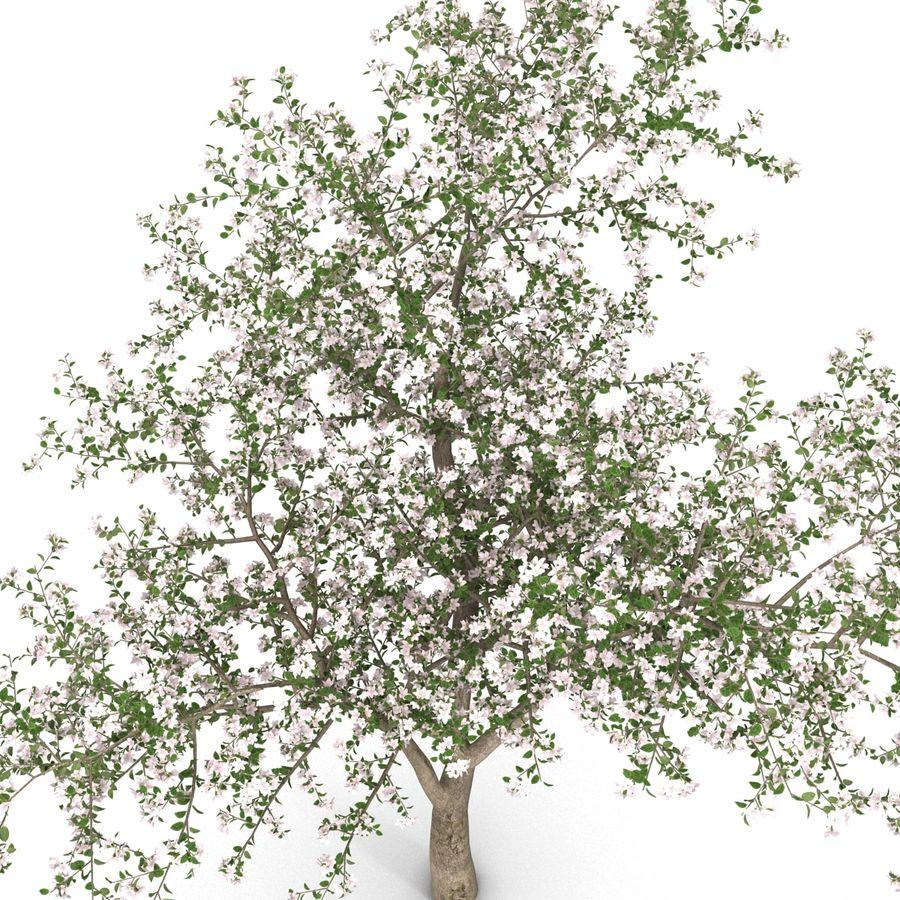 꽃 사과 나무 royalty-free 3d model - Preview no. 12