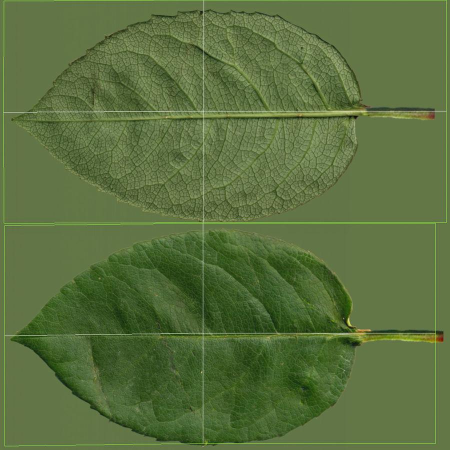 꽃 사과 나무 royalty-free 3d model - Preview no. 3