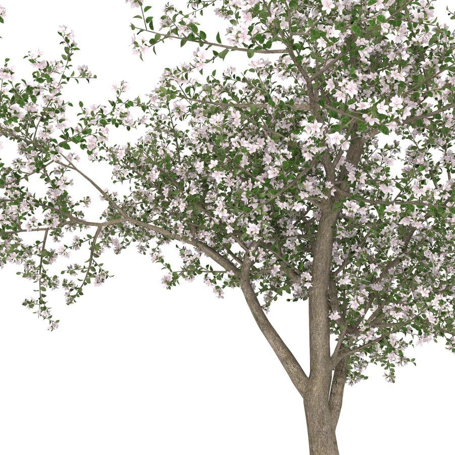 꽃 사과 나무 royalty-free 3d model - Preview no. 26