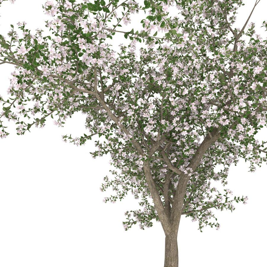 꽃 사과 나무 royalty-free 3d model - Preview no. 24