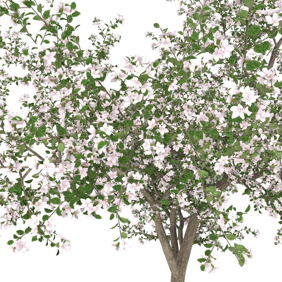꽃 사과 나무 royalty-free 3d model - Preview no. 21