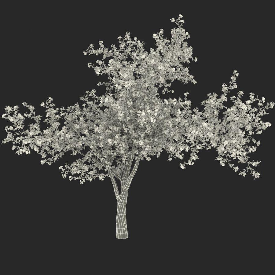 꽃 사과 나무 royalty-free 3d model - Preview no. 31