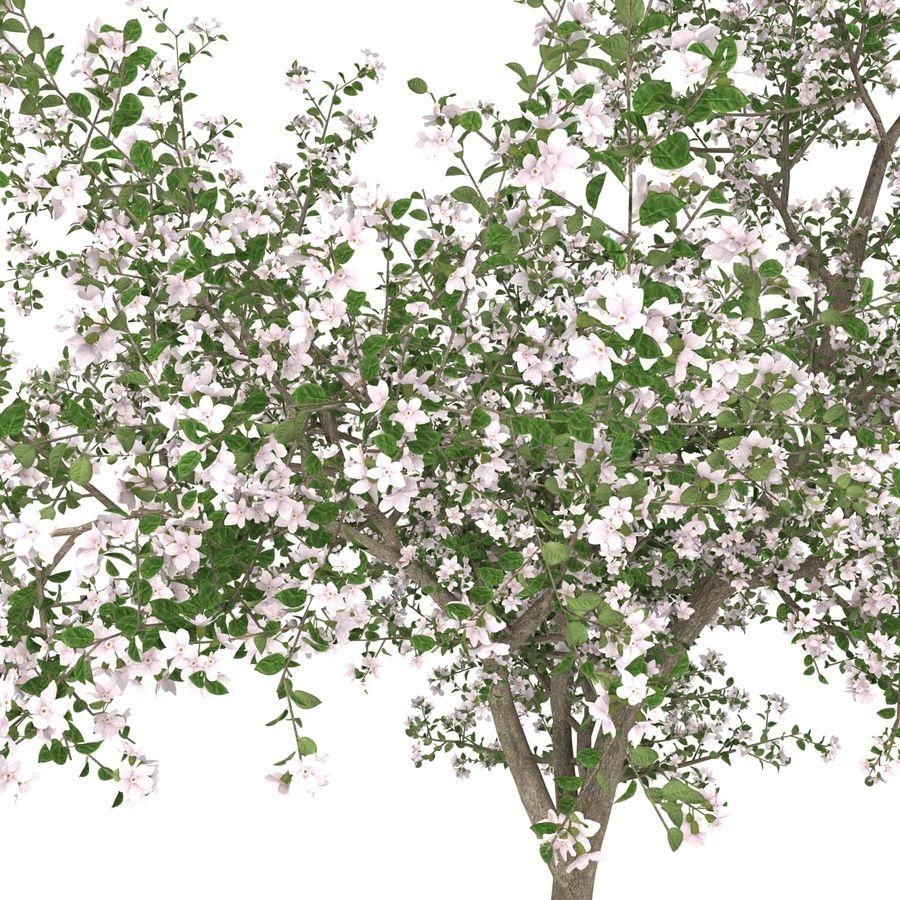 꽃 사과 나무 royalty-free 3d model - Preview no. 23