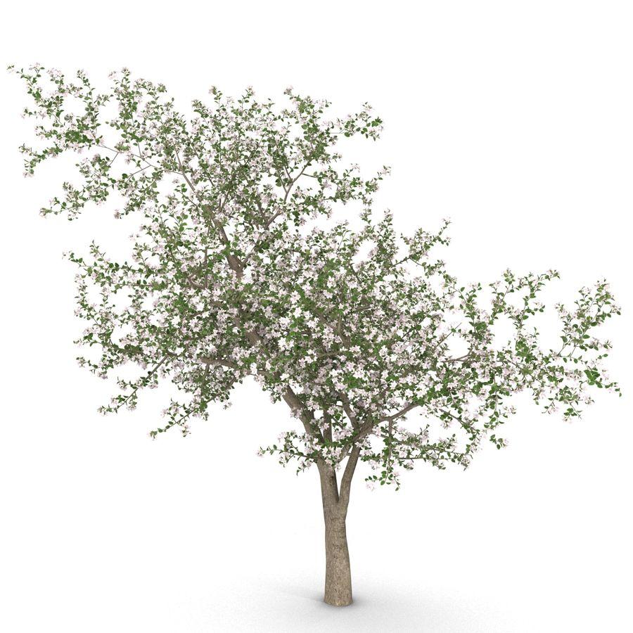 꽃 사과 나무 royalty-free 3d model - Preview no. 9