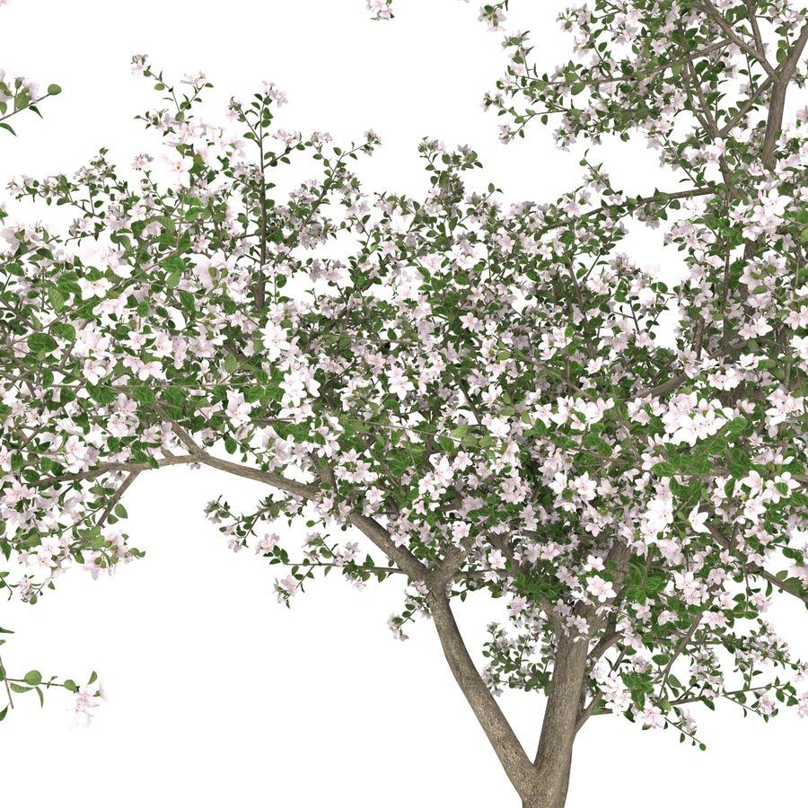 꽃 사과 나무 royalty-free 3d model - Preview no. 20