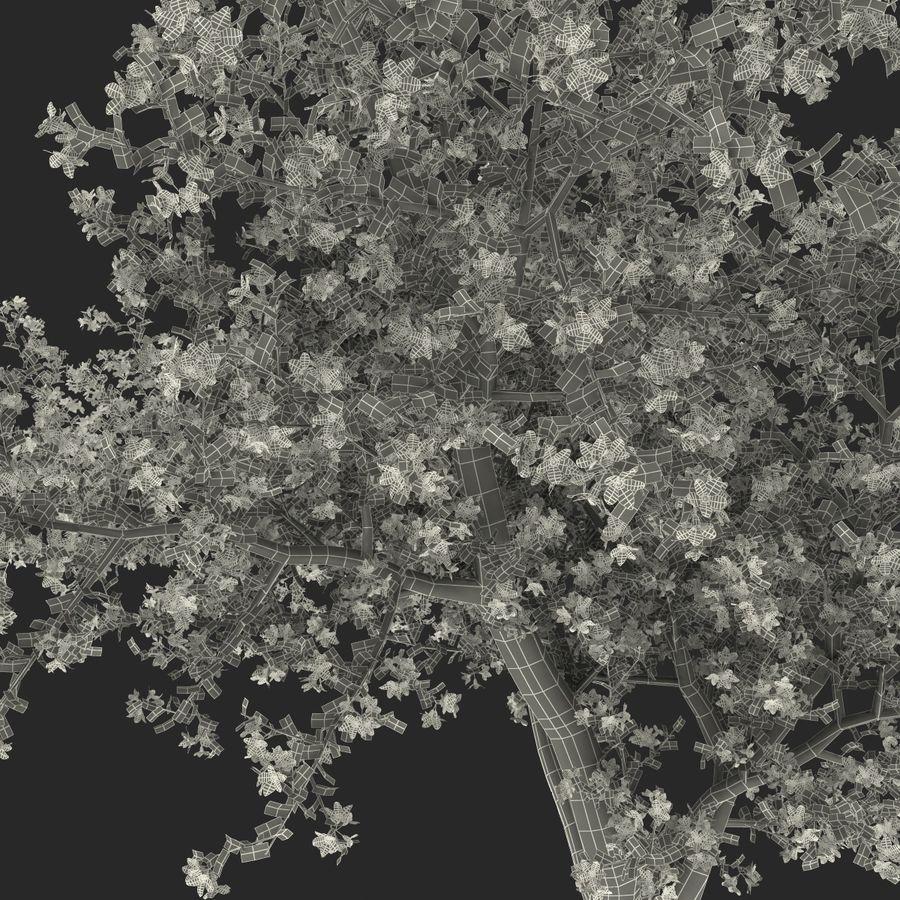 꽃 사과 나무 royalty-free 3d model - Preview no. 41