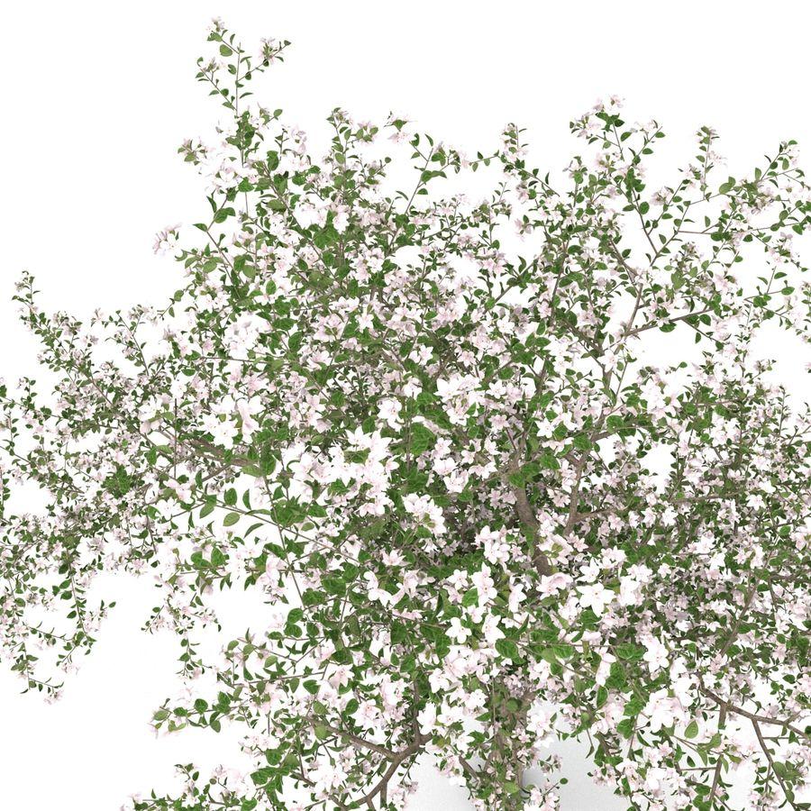 꽃 사과 나무 royalty-free 3d model - Preview no. 17