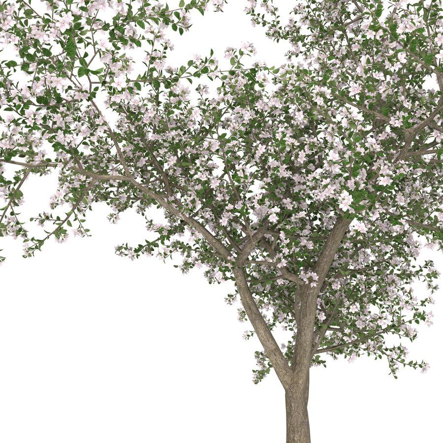 꽃 사과 나무 royalty-free 3d model - Preview no. 25