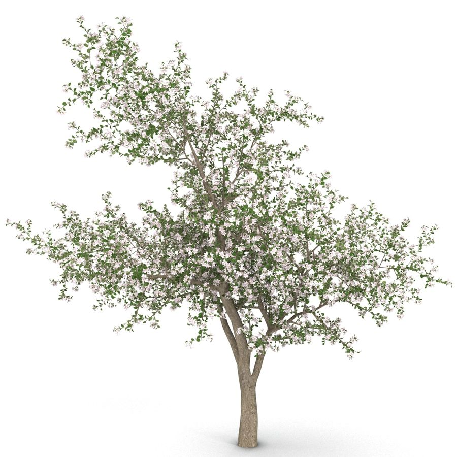 꽃 사과 나무 royalty-free 3d model - Preview no. 8