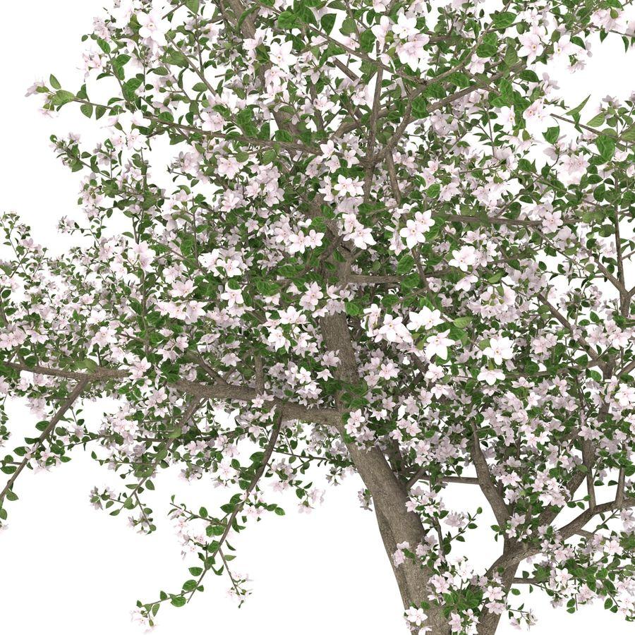 꽃 사과 나무 royalty-free 3d model - Preview no. 18