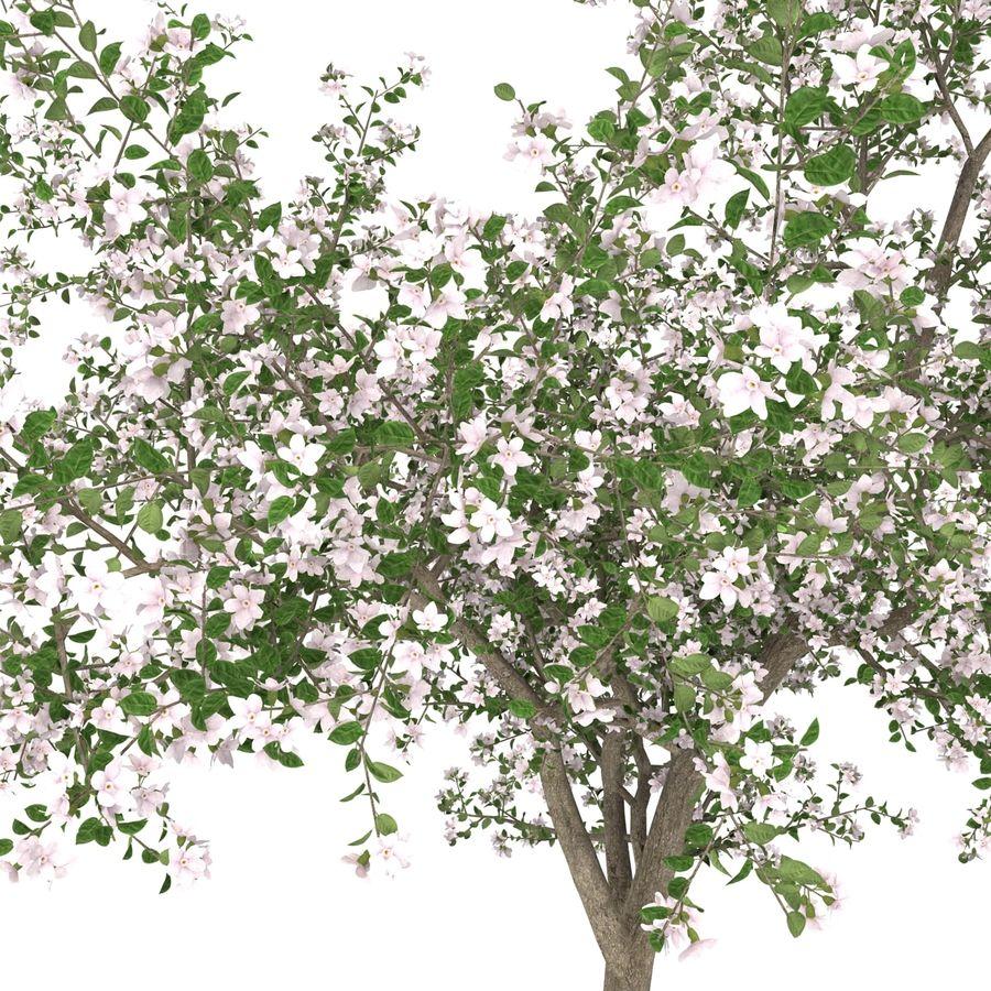 꽃 사과 나무 royalty-free 3d model - Preview no. 22