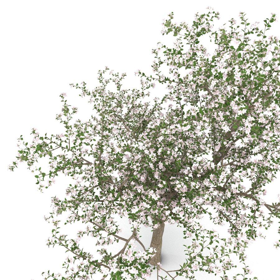꽃 사과 나무 royalty-free 3d model - Preview no. 15