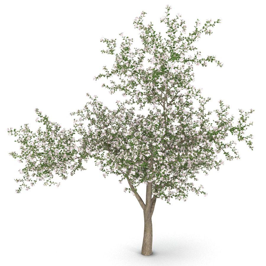 꽃 사과 나무 royalty-free 3d model - Preview no. 7